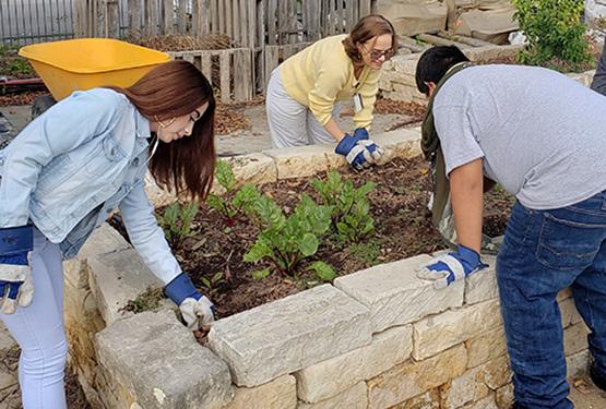 three people gardening
