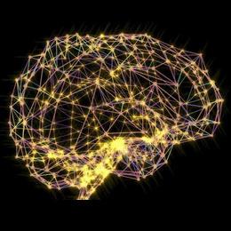 neural network of brain
