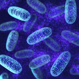 mitochondria microscopic view