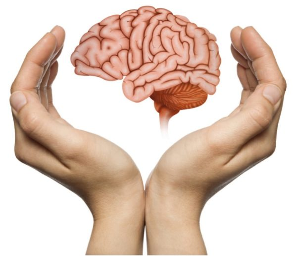 Brain and hands stock photo