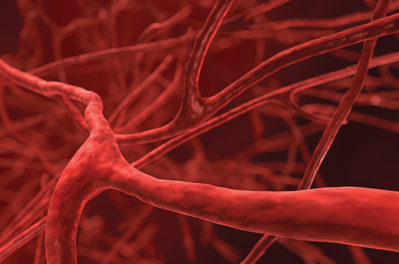 microscopic view of veins