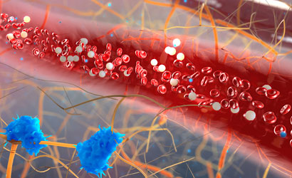 red and white blood cells moving inside blood vessel